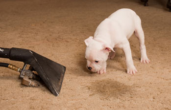 Pet Stains? How Well Trained Are Your Pets?? Pet Stain Removal